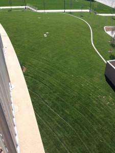 University of Utah Turf Grass installation by The Turf Company
