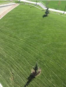 University of Utah Sod installation by The Turf Company